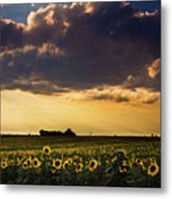 A Summer Evening Serenade Metal Print