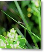 A Summer Of Dragonfly Kisses Metal Print