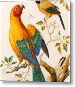 A Sun Conure Parrot  Metal Print
