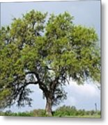 A Tale Of One Tree Metal Print