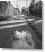 A Terriers Perspective Metal Print
