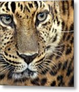 A Thing Of Beauty Metal Print