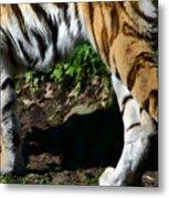 A Tigers Stride Metal Print
