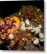 A Ton Of Tunicates Metal Print