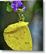 A Touch Of Beauty Metal Print