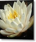 A Touch Of Elegance On The Pond Metal Print