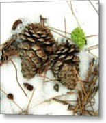 A Touch Of Moss Metal Print