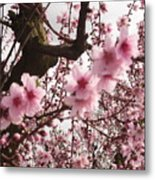 A Touch Of Pink Metal Print by Susanne Awbrey