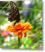 A Touch Of Summer's End Metal Print