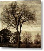 A Tree Along The Roadside Metal Print
