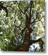 A Tree Metal Print