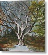 A Tree For All Seasons  Metal Print
