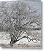 A Tree In Canaan Metal Print