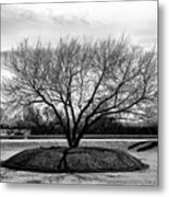 A Tree In Fort Worth Metal Print