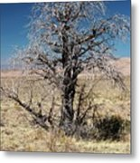 A Tree In The Dry Land Color Metal Print