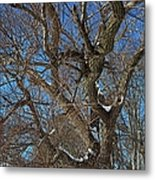 A Tree In Winter- Horizontal Metal Print