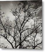 A Tree Laid Bare Metal Print