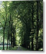 A Tree Lined Path Leads To Mad King Metal Print