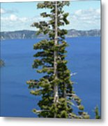 A Tree With A View Metal Print by Methune Hively