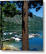 A Trees View Of Fallen Leaf Lake Metal Print