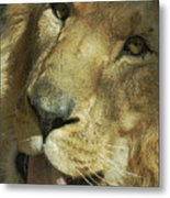 A Tribute To Elson 3 Metal Print by Ernie Echols