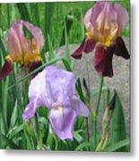 A Trios Of Irises Metal Print