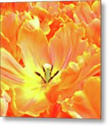 A Tulip Fully Open Metal Print