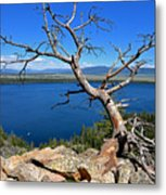 A Twisted View Metal Print