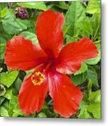A Very Red Flower Metal Print