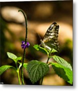 A  View Of A Butterfly Metal Print