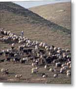 A View Of Sheep In The Judean Desert Metal Print