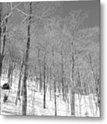 A View Through The Woods Metal Print