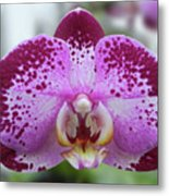 A Violet Orchid Metal Print