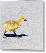 A Walk On Asphalt  Metal Print