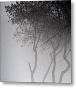 A Walk Through The Mist Metal Print