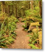 A Walk Through The Rainforest Metal Print