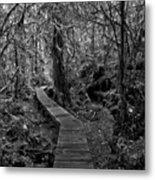 A Walk Through The Willowbrae Rainforest Black And White Metal Print
