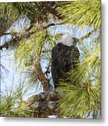 A Watchful Eye Metal Print