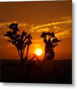 A Weed Sunset Metal Print