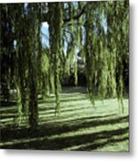 A Weeping Willow Casts Long, Cool Metal Print