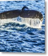 A Whale Of A Tail Metal Print