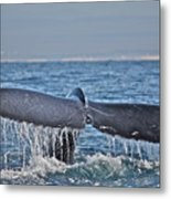 A Whale Of A Tale Metal Print