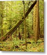 A Whisper In The Rainforest Metal Print
