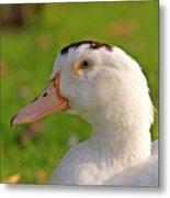 A White Duck, Side View Metal Print