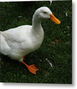 A White Duck Metal Print
