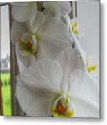 A White Orchid Day Metal Print