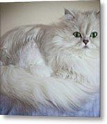 A White Persian Chinchilla Cat Metal Print