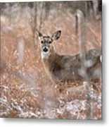 A White-tailed Deer In The Snow Metal Print
