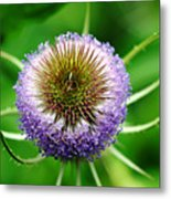 A Wild And Prickly Teasel Metal Print