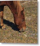 A Wild Pony In Assateague Metal Print